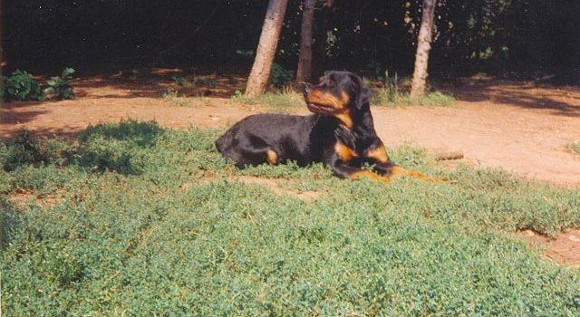 Vanda kutyánkról 1991.