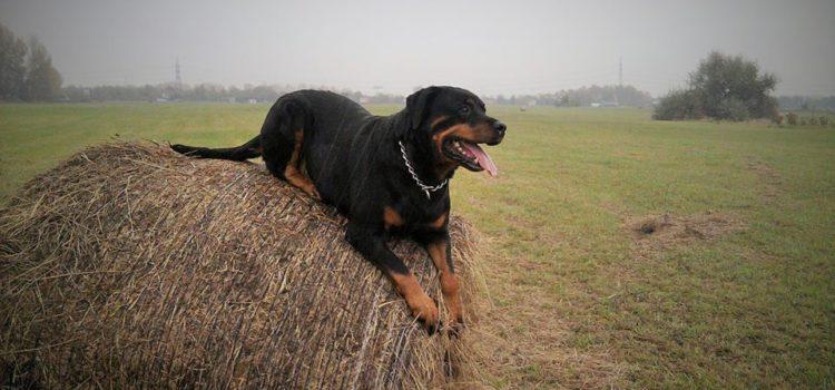 Közös akciók a kutyával