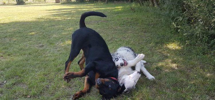 Már a mi kutyánk!