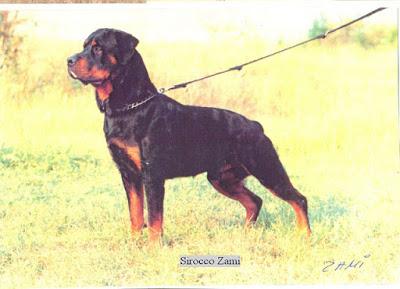 Zami története 1995.