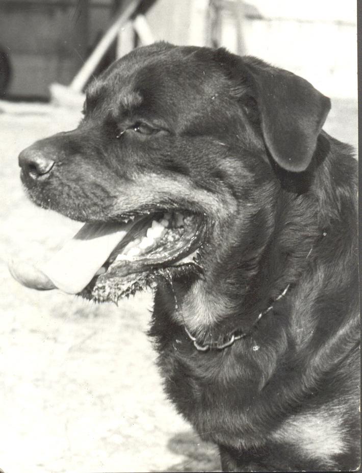 az első kutyánk