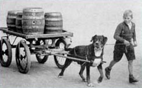 A rottweiler eredete