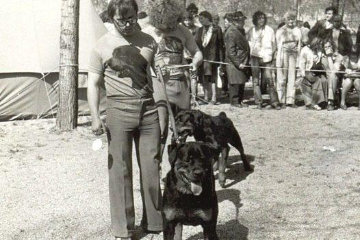 Rottweilert szeretnék
