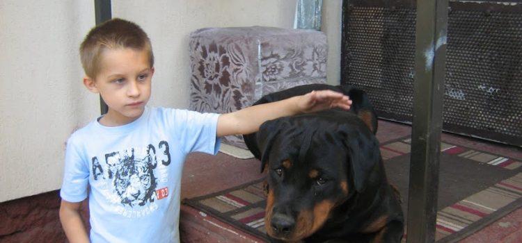 Gyerek és rottweiler