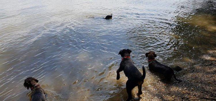 A kutya fürdetése